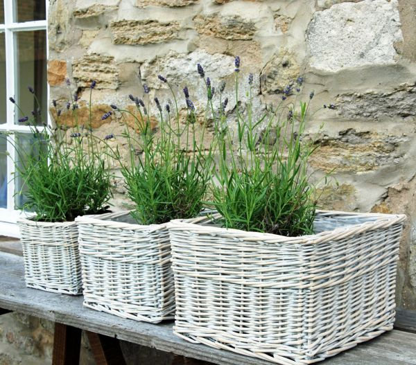 Calne Washed Willow Square Basket Planter